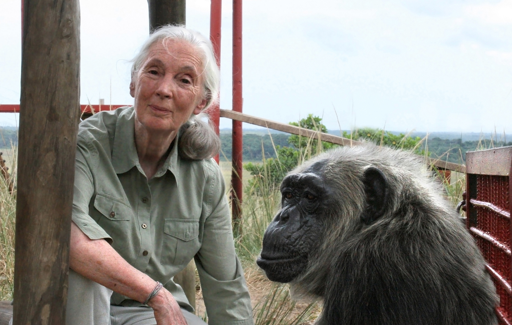 Jane Goodall with Chimpanzee